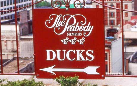 The famed Memphis hotel, The Peabody, is planning to open a Roanoke location in 2022.  It will be located in the walkable downtown corridor, near the Roanoke Community Center and the new City Hall.  And yes – like the original, it will have a large Grand Lobby with ducks swimming in the fountain!